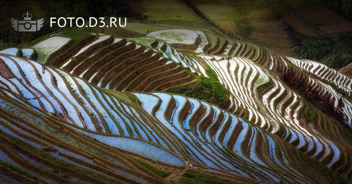 Рисовые террасы 龙脊梯田