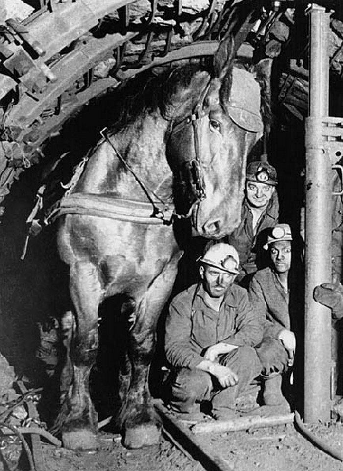 Французские коногоны и их рабочая лошадь, Франция, 1966, miningwiki.ru