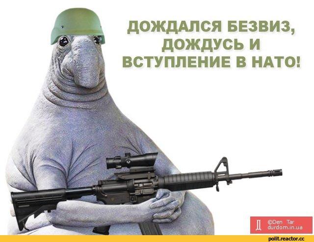 Україна не має наміру зупинятися на статусі країни-аспіранта в НАТО і окремо проситиме ПДЧ, - Пристайко - Цензор.НЕТ 547