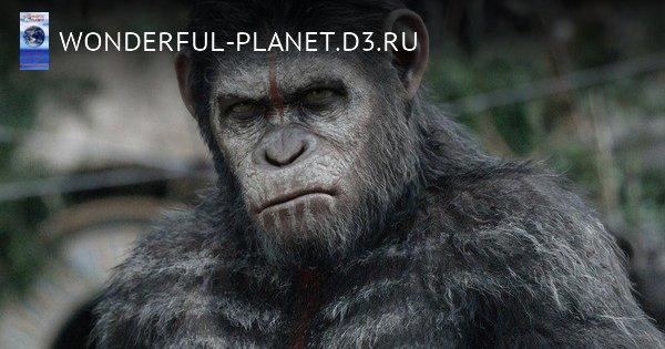 Война или мир: если бы все виды на Земле были разумными