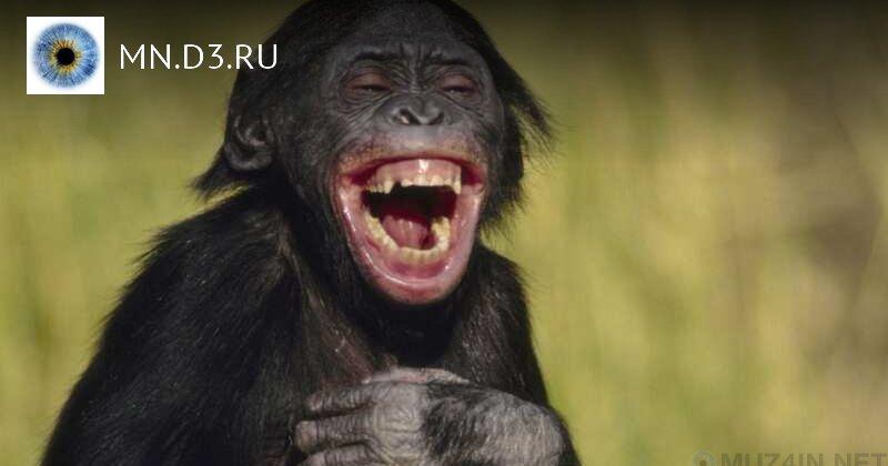 10 увлекательных научных находок о смехе