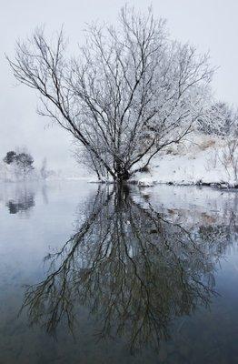 дерево-рефлексия