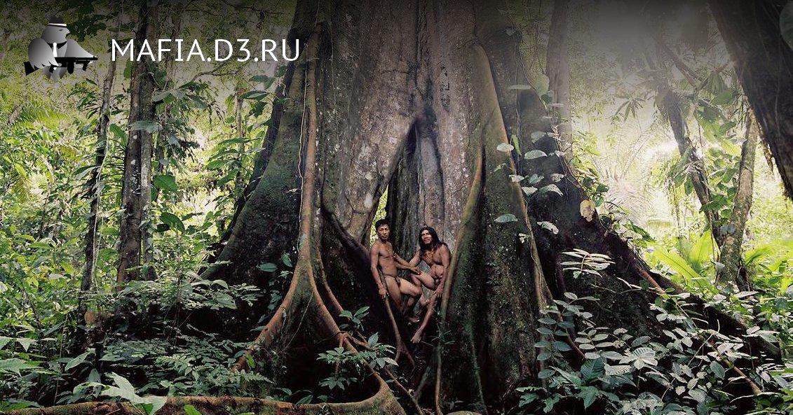 Дальше в ̶л̶е̶с̶ джунгли...